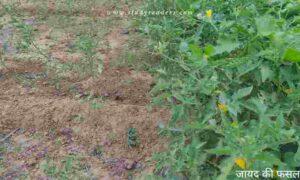भारत में कृषि के प्रकार